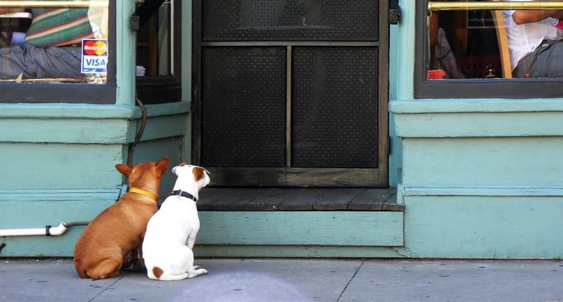 Pet Door Installation Gold Coast photo